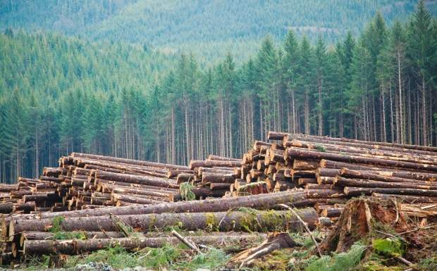Sharing data to boost BC forest industry