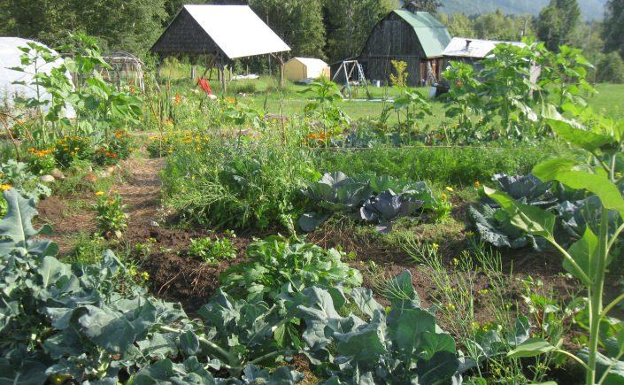 Farming in B.C. Goes High Tech With $14-million Innovation Program