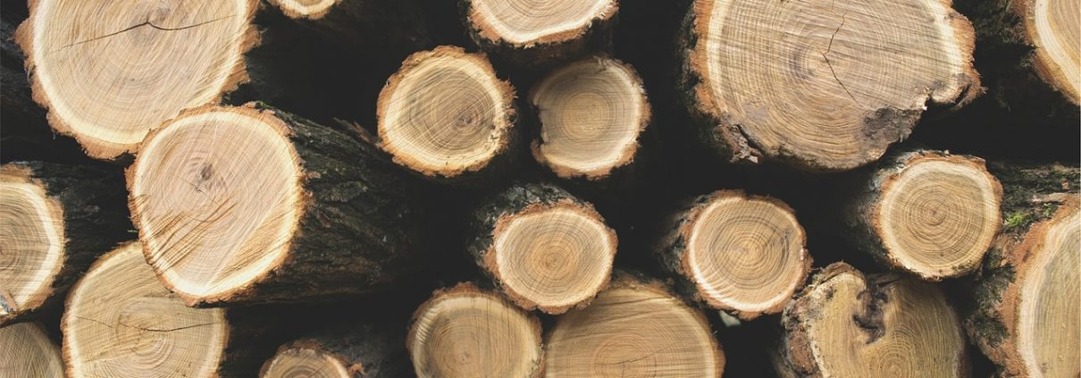 Forestry: A Success Story in Clean Tech